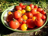 Gartenbauverein Schlüsselfeld lädt zum Dia-Vortrag ein
