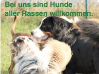 Jahreshauptversammlung SV Schäferhundeverein OG Elsendorf